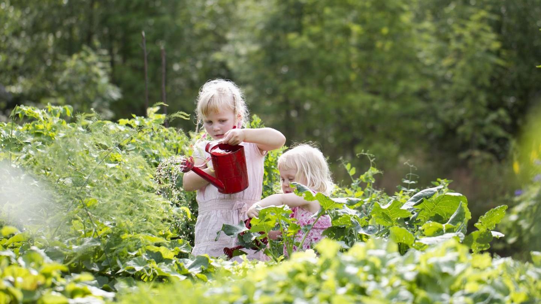 เด็กผู้หญิงผมบลอนด์สองคนกำลังรดน้ำต้นไม้ในสวนผัก