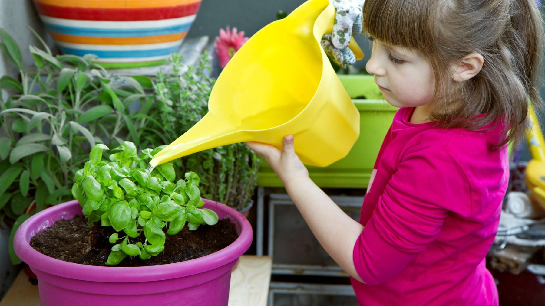 เด็กผู้หญิงใส่เสื้อสีชมพูกำลังรดน้ำต้นไม้ผักในสวนหลังบ้าน